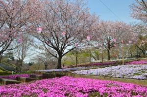八重桜と芝桜