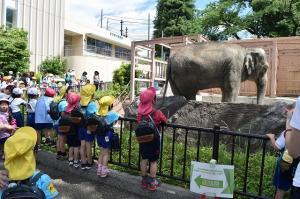 ゾウの見学