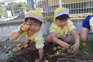 ジャガイモを掘りだしたよ