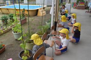 野菜の成長を観察したよ