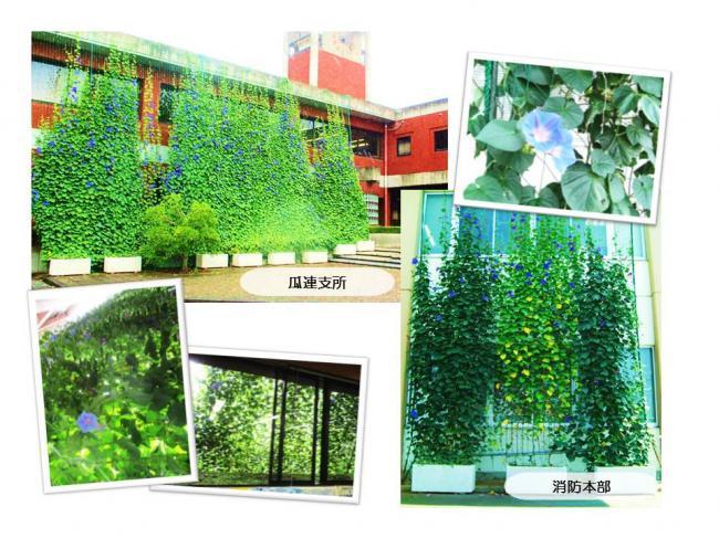 H30グリーンカーテン画像4