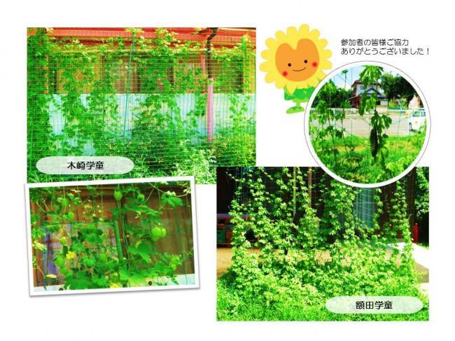 H30グリーンカーテン画像6