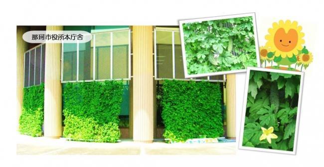 H30グリーンカーテン画像3