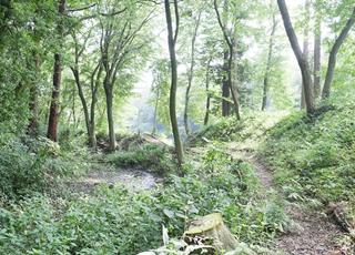 いぃ那珂暮らし 森の中の散歩道