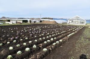 水戸農業高校の畑に到着