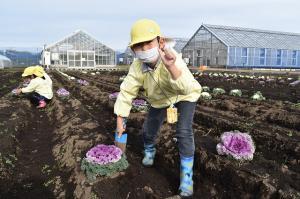 苗を掘り起こす