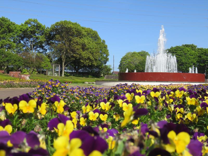 植物園の噴水