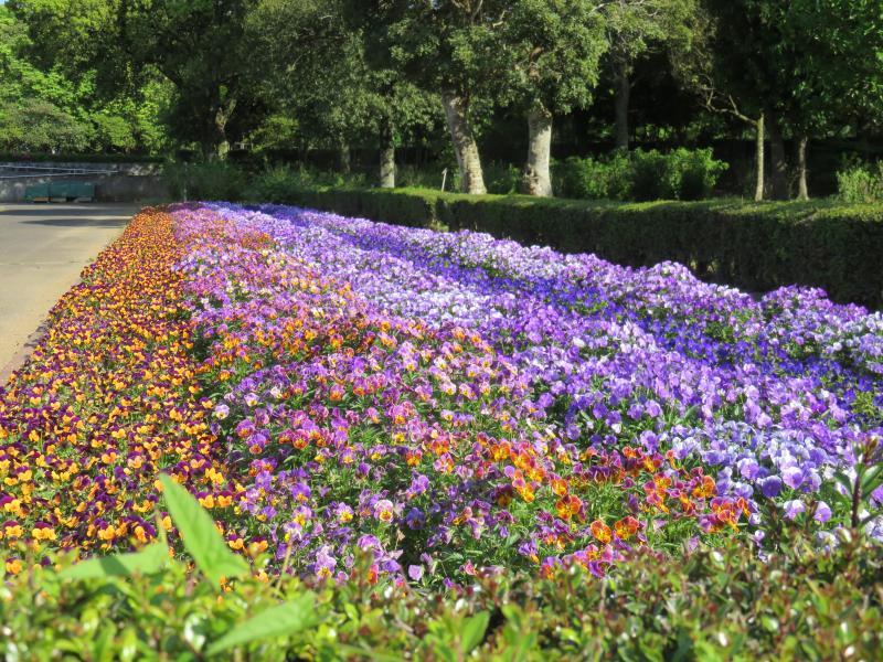 植物園の色とりどりの花
