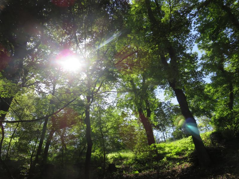 県民の森の木々の隙間からさす陽光