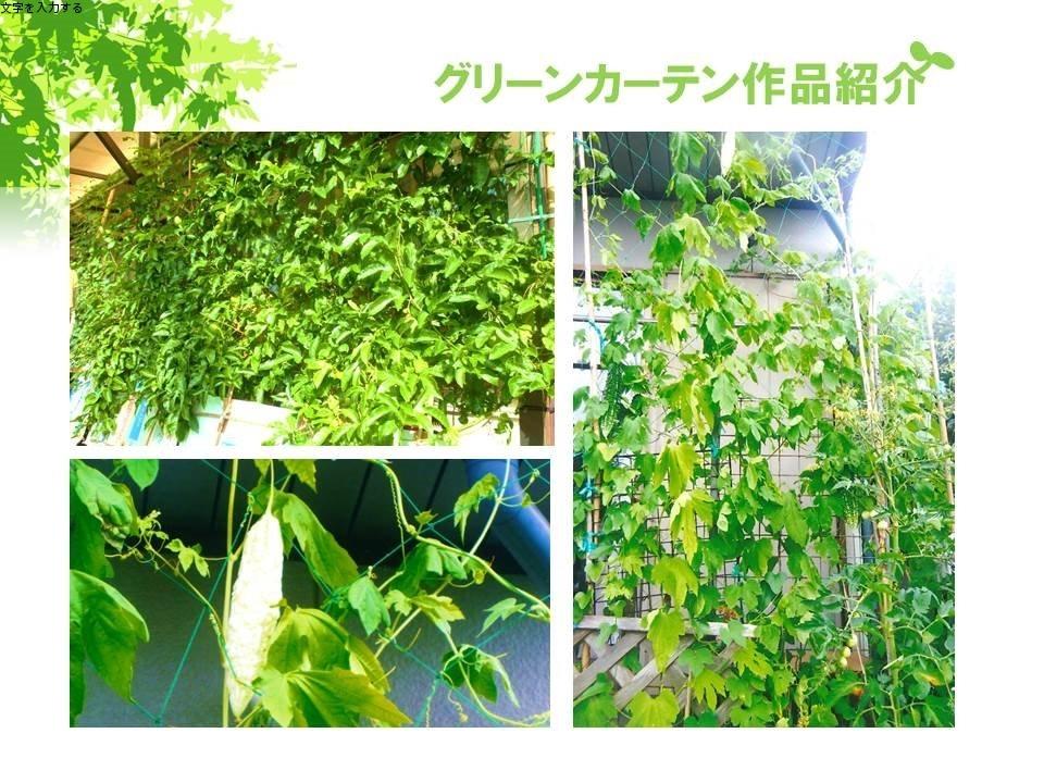 r1グリーンカーテン画像1