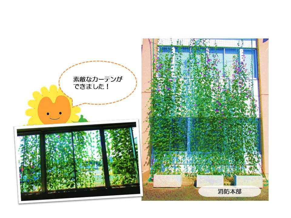 r1グリーンカーテン画像4