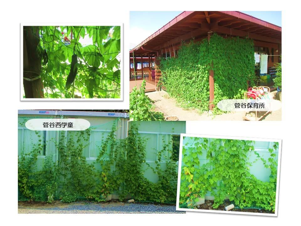r1グリーンカーテン画像5