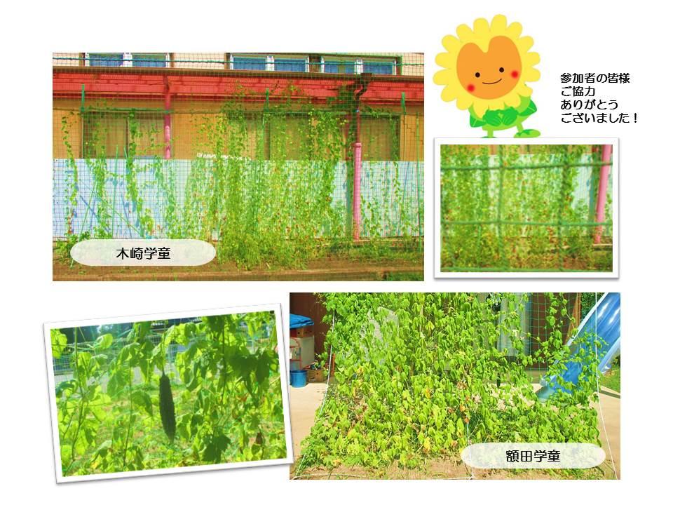 r1グリーンカーテン画像6